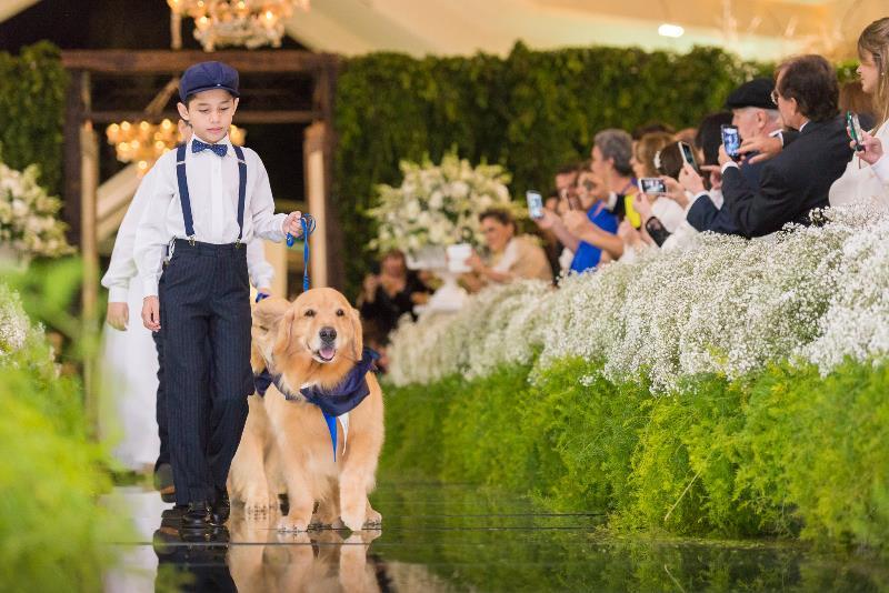 cachorro casamento